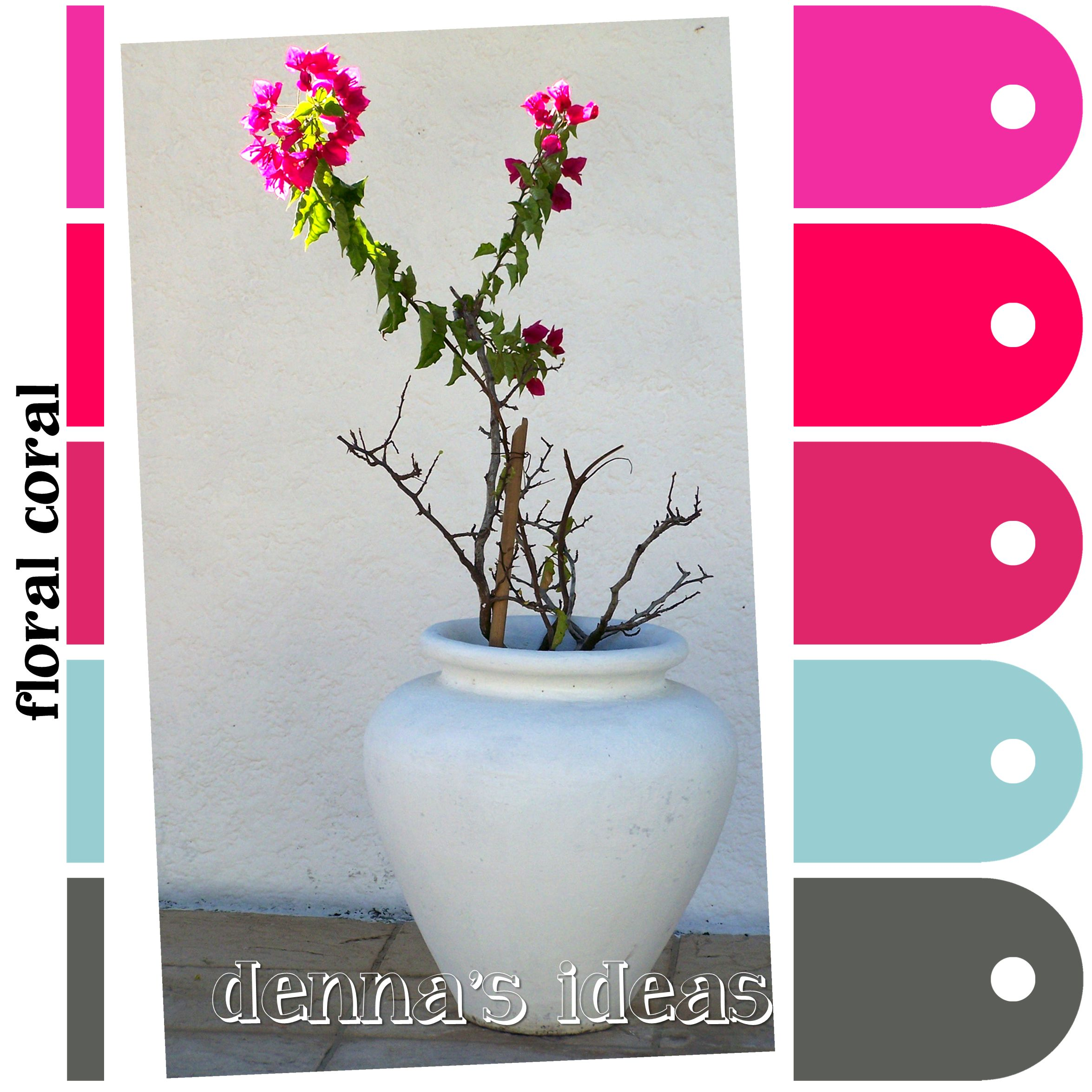 PLANTanswers: Plant Answers> Growing Bougainvilleas