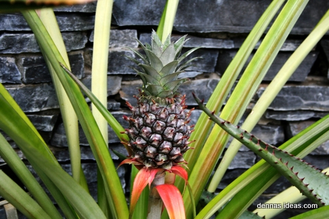 denna's ideas: tropical plants and flowers